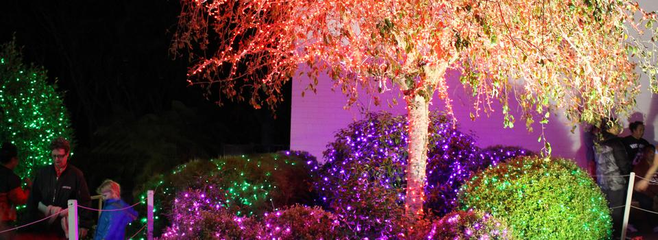 Visitors to Temple Christmas Lights Share Inspirational Thoughts